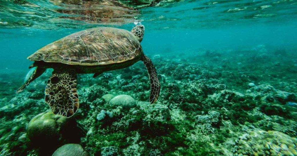 Increíble vida marina en Playa del Carmen
